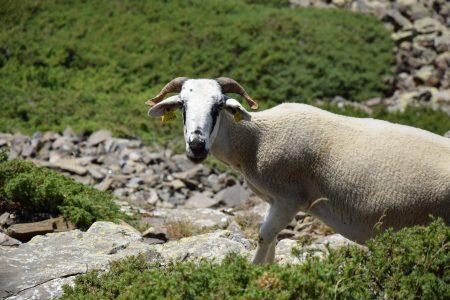 Le parc naturel de Montseny en Espagne