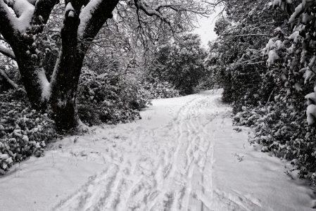 Février 2018 : neige sur le Gard