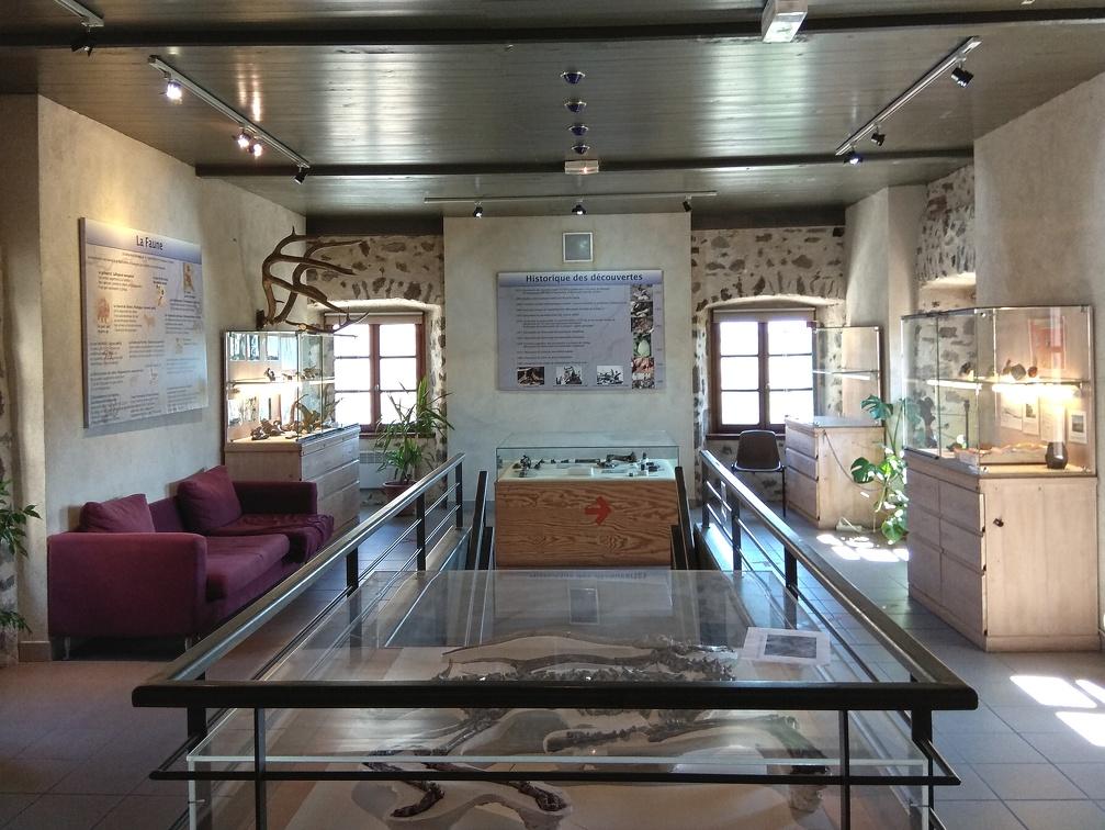 Le musée de Paléontologie